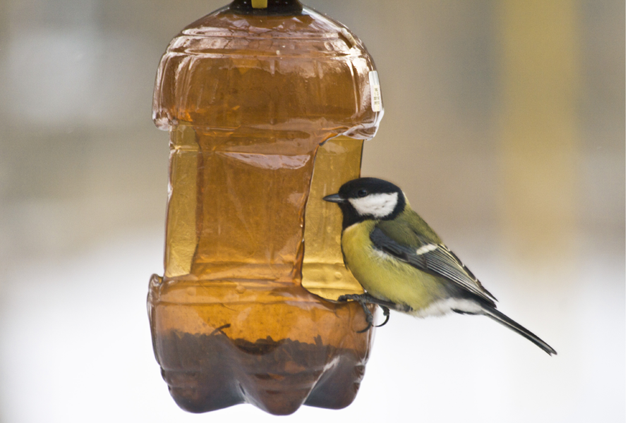 bird feeder bottle